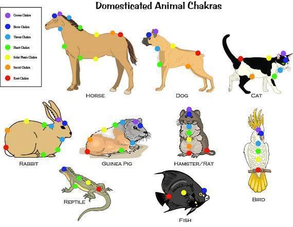 Les chakras et les animaux
