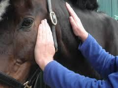 Reiki chevaux