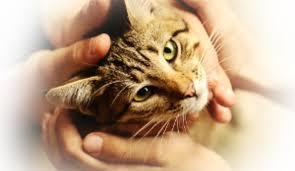 Reiki pour un chat